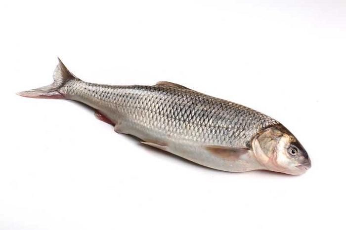 پخت ماهی کفال
