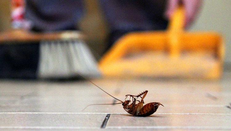 بهترین روش برای دفع حشرات