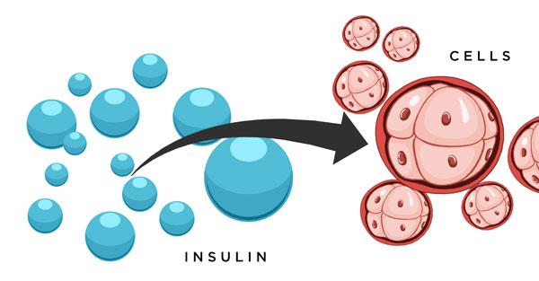 هورمون چاقی انسولین